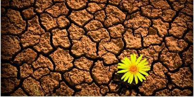 Programa de Resiliencia Organizacional